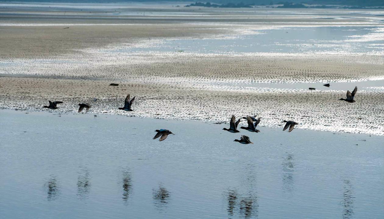 画像:干潟を飛ぶ鳥